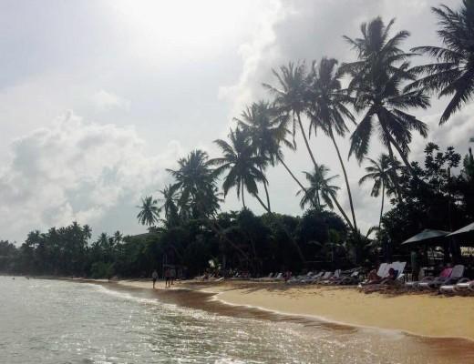 mirissa-plages-sud-sri-lanka