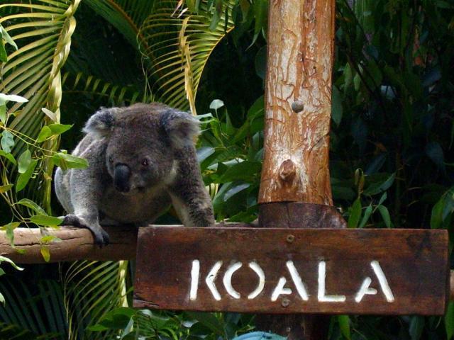 les-exploratrices-fanny-skyblog-australie-2006-koala