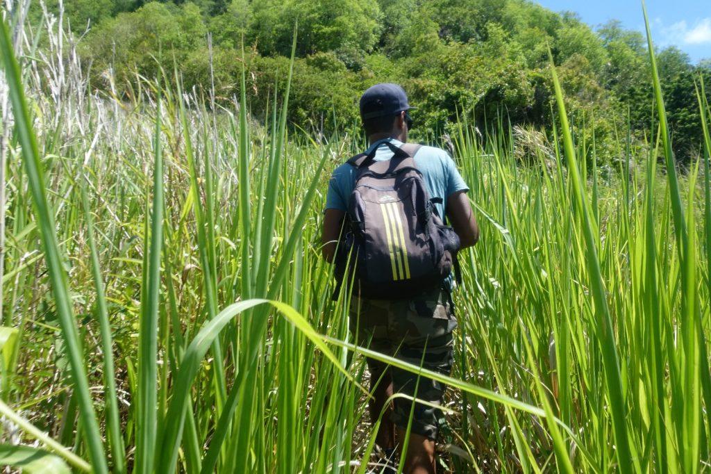 les-exploratrices-maurice-montagne-du-lion-canne-a-sucre