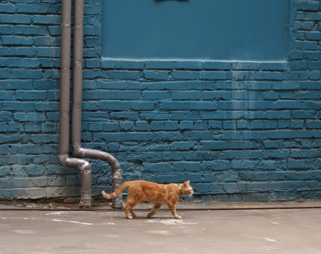 les-exploratrices-moscou-russie-le-chat-art-play