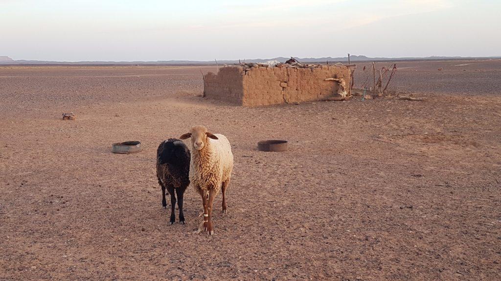 les-exploratrices-maroc-merzouga-camp-nomade