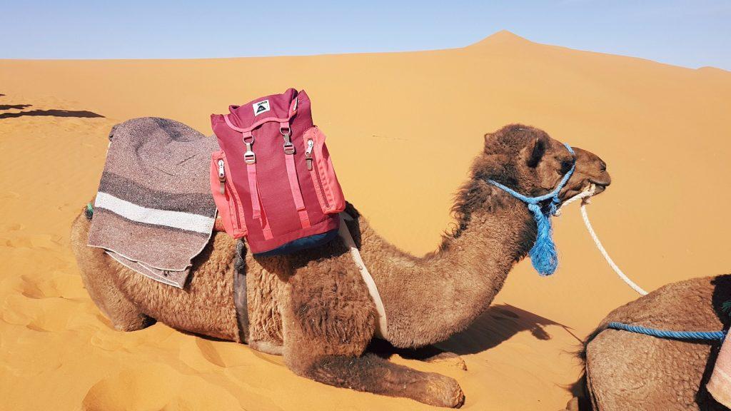 les-exploratrices-maroc-merzouga-desert-chameau-poler