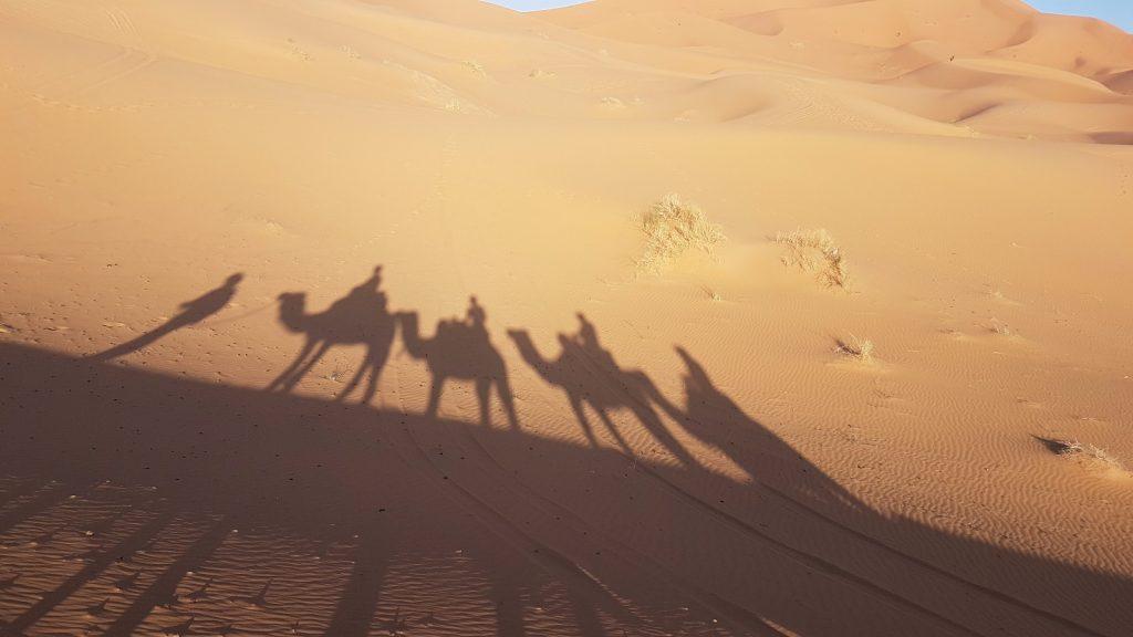 les-exploratrices-maroc-merzouga-ombre-chameaux