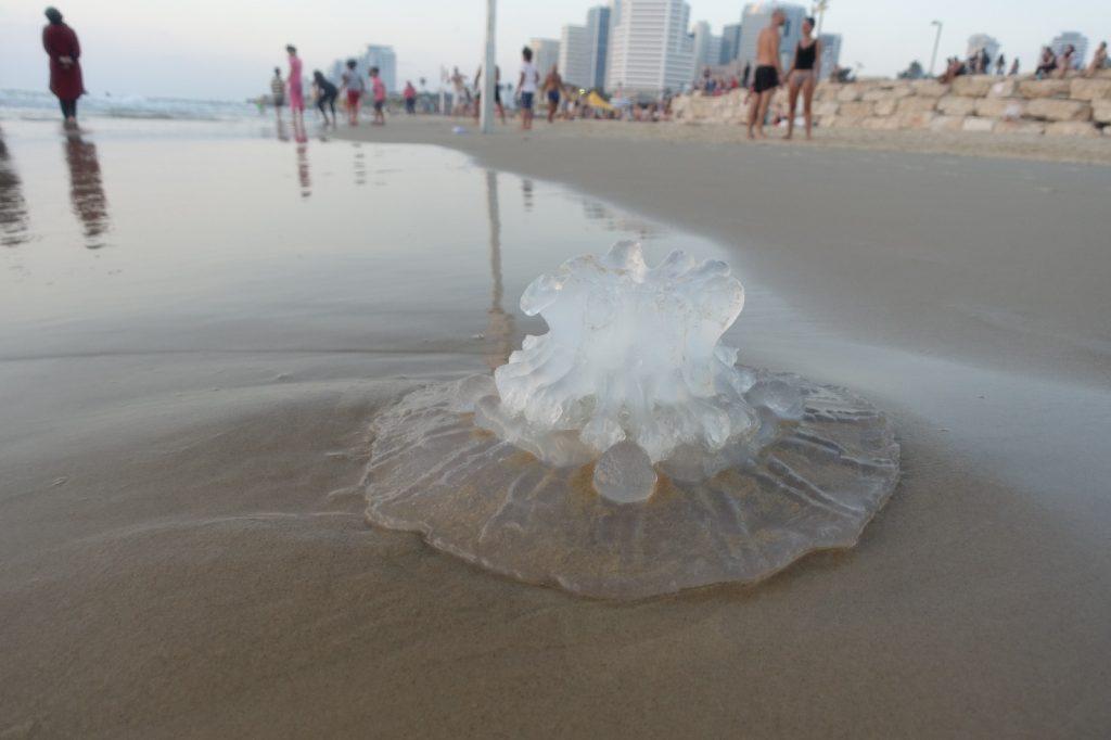 les-exploratrices-tel-aviv-israel-meduse