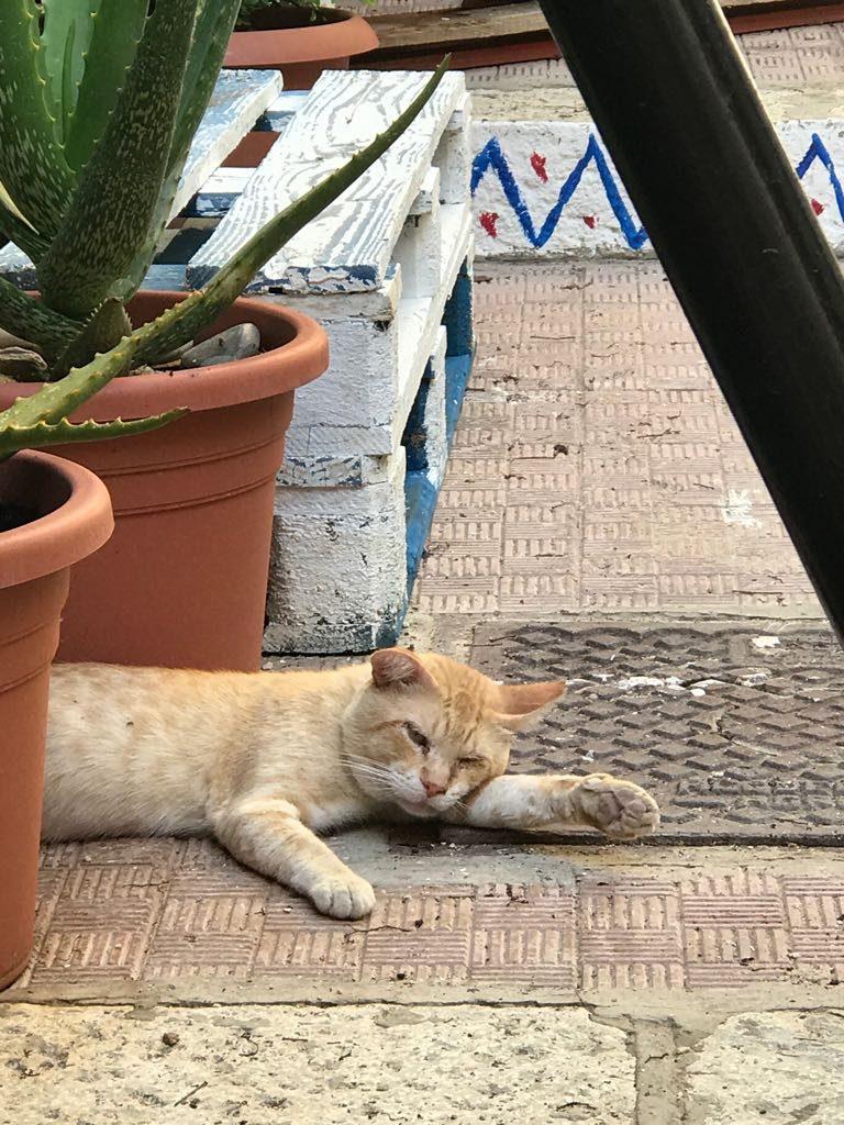 les-exploratrices-le-sud-de-la-sicile-chat-agrigente-sud de la Sicile