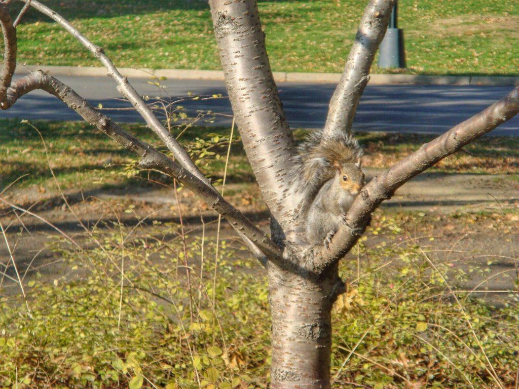 les-exploratrices-nyc-central-park-ecureuil