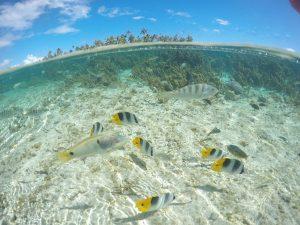 la polynésie française et le jardin de corail à tahaa