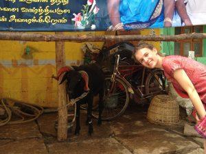 voyager seule en inde du sud et rencontrer des animaux
