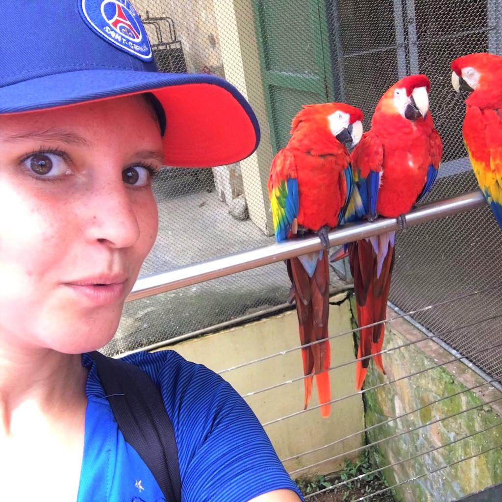 5 bonnes raisons de découvrir Puerto Rico et ses perroquets