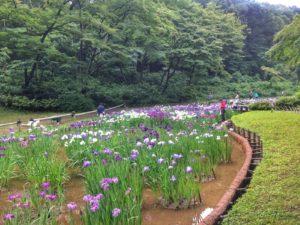 voyage à tokyo yoyogi park