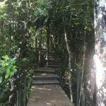 ebony-forest-maurice