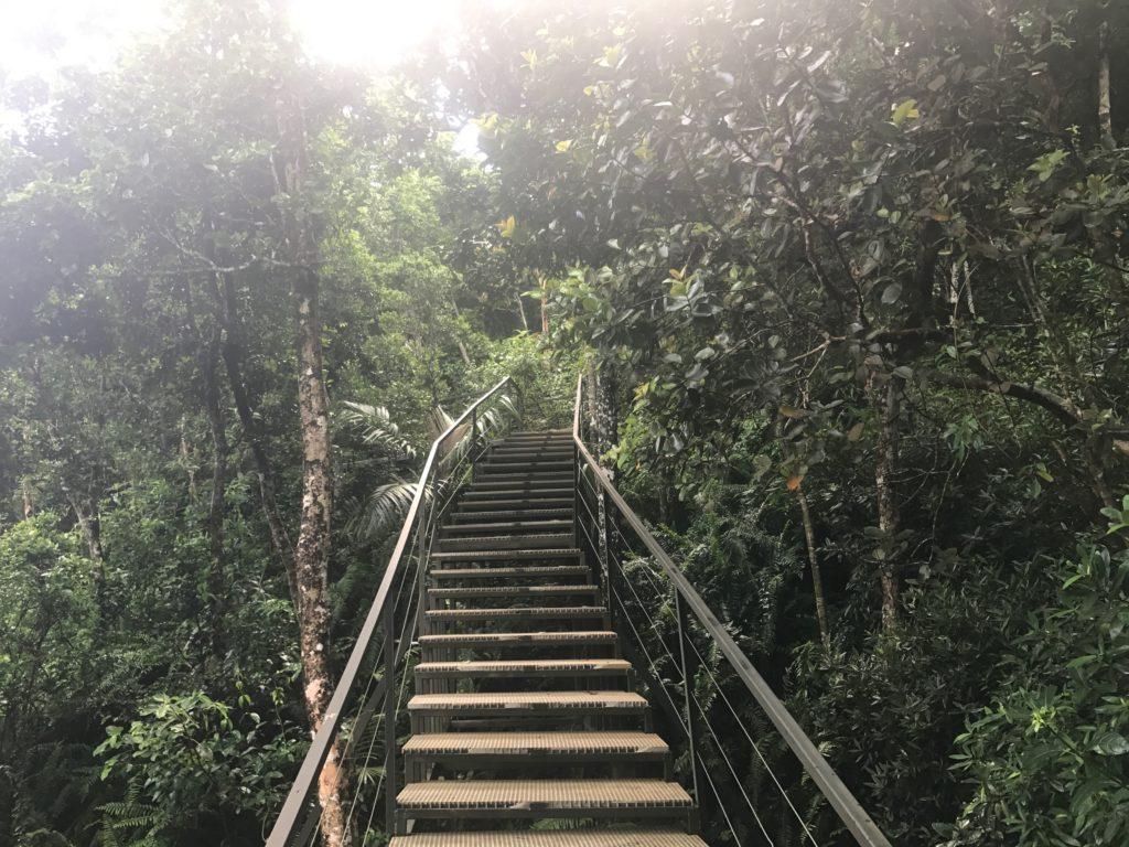 île-maurice-forêt-ebene
