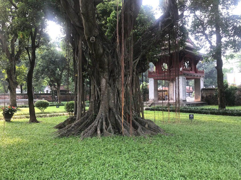 arbre-ancien-hanoï